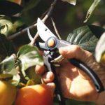 Fiskars 111960 Sécateur de la marque Fiskars image 1 produit