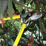 Grüntek Petite Cisaille coupe branches GRIZZLY 470 mm, Cisaille à enclume avec système à double crémaillère GEAR DRIVE. Élagueur et Sécateur 2 en 1 !! de la marque Grüntek image 2 produit