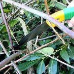 GRÜNTEK Scie Elagage Branches BARRACUDA à coupe rapide 300mm pour jardin avec dents durcies et étui en plastique. PRIX DE LANCEMENT avec garantie de satisfaction! de la marque GRÜNTEK image 2 produit
