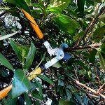 GRÜNTEK Ebrancheur - Coupe Branches Lopper T-REX 765mm, Cisailles d'élagage avec système de coupe à crémaillère double GEAR DRIVE, lame de 67mm. SATISFAIT ou REMBOURSé de 45 jours !! de la marque GRÜNTEK image 3 produit