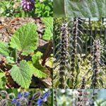 Kit de graines: 'Plantes et fleurs mellifères pour des abeilles', semences de 5 variétés de plantes à fleurs connues pour attirer les abeilles, le cadeau parfait pour tous les apiculteurs et cultivateurs de fruits de la marque Magic Garden Seeds image 1 produit