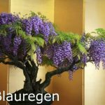 kit entretien bonsaï TOP 0 image 1 produit