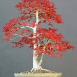 kit entretien bonsaï TOP 0 image 3 produit