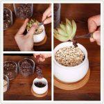 kit entretien bonsaï TOP 4 image 3 produit