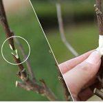 outil pour élaguer un arbre TOP 13 image 4 produit