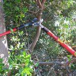 TABOR TOOLS GG11 Coupe-Branches à Lames franches pour Bois Vert, Revêtement Antiadhésif, Diamètre de Coupe: 4 1/2 cm de la marque TABOR TOOLS image 2 produit