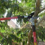 TABOR TOOLS GG12 Coupe-Branches à Enclume pour Bois Vert ou Dur, Revêtement Antiadhésif, Diamètre de Coupe: 5 cm de la marque TABOR TOOLS image 2 produit