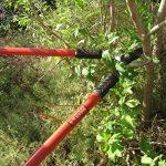 TABOR TOOLS GL16 Coupe-Branches à Lames franches pour Bois Vert, Revêtement Antiadhésif, Diamètre de Coupe: 3 cm de la marque TABOR TOOLS image 2 produit