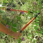 TABOR TOOLS GL16 Coupe-Branches à Lames franches pour Bois Vert, Revêtement Antiadhésif, Diamètre de Coupe: 3 cm de la marque TABOR TOOLS image 4 produit