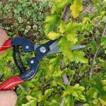 TABOR TOOLS K-7 Sécateur de précision, ciseaux de jardin, ciseaux de récolte pour fruits, fleurs coupées, herbes, légumes hydroponiques et raisins. de la marque TABOR TOOLS image 3 produit